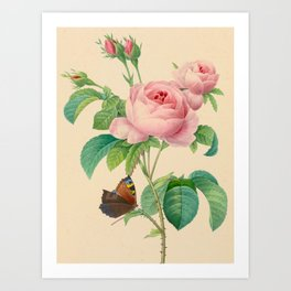 Selection of the most beautiful flowers Pink Rose - Pierre-Joseph Redouté - 1827 Art Print