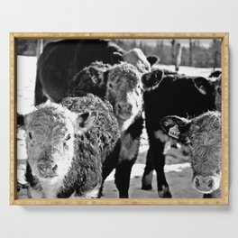 B&W Baby Cows Serving Tray