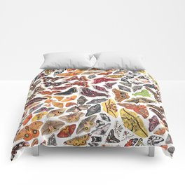 Saturniid Moths of North America Pattern Comforters