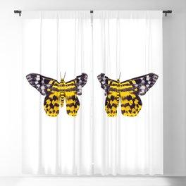 butterfly moth Dysphania subrepleta isolated Blackout Curtain