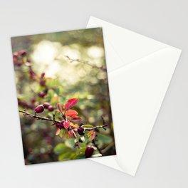 Autumn Glow I Stationery Cards