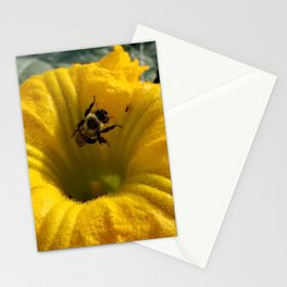 Pollen collecting in a pumpkin blossom Stationery Cards