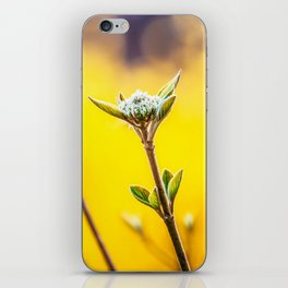 Printable Flowers Photo, First Green Blossoms on a Bush, Bright Blur Yellow Background. iPhone Skin