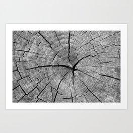 Weathered Old Wood Texture Art Print