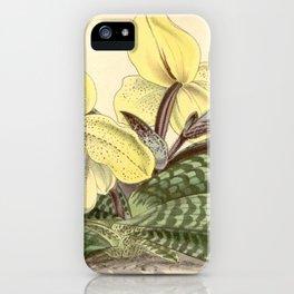 Paphiopedilum concolor iPhone Case