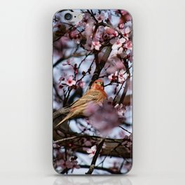 Spring Blossoms - Male House Finch iPhone Skin