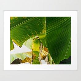 BANANA LEAVES #1 Art Print