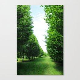 Hornbeam Tree Avenue Canvas Print