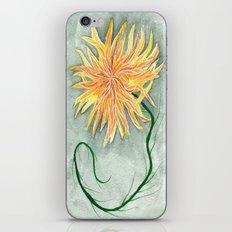 yellow dahlia iPhone & iPod Skin
