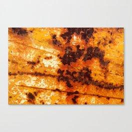 Rust Marks Canvas Print