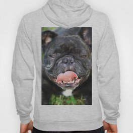 Französische Bulldogge Hoody