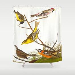 Arkansaw Siskin Bird Shower Curtain