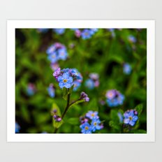 Forget-me-nots In The Rain Art Print