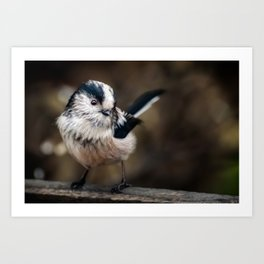 Fluffy The Long-Tailed Tit Art Print
