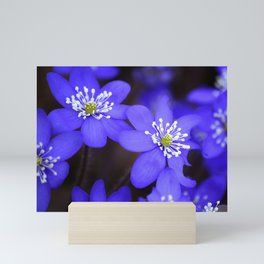 First Spring Flowers in Forest Mini Art Print