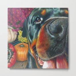 black Rottweiler dog and HarvestPumpkin Color Pencil art print Metal Print