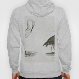 187 White-crested Heron (Ardea candidissima) 188 Green Heron or Poke (Ardea virescens)  from Zoology Hoody