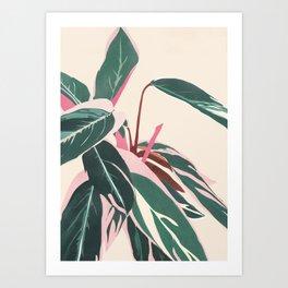 Stromanthe Sanquinea Art Print