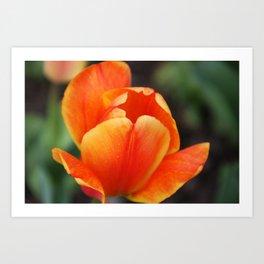 Tulip - Orange Art Print
