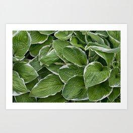 Hosta Leaves in the Rain Art Print