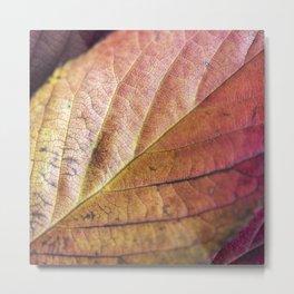 Autumn Colours II Metal Print