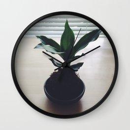 Kokedama Shadows Wall Clock