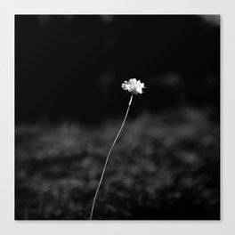 THE LAST FLOWER Canvas Print