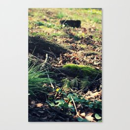 The Back Steps Canvas Print