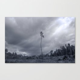 Last one standing Canvas Print