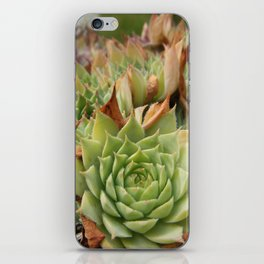 Hens and Chicks Plant iPhone Skin