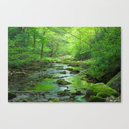 Rocky Forest Creek Canvas Print