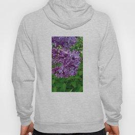 Lilac Blooms Hoody