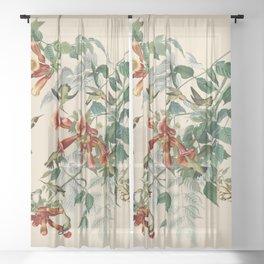 Vintage Hummingbird Illustration - Birds of America Sheer Curtain