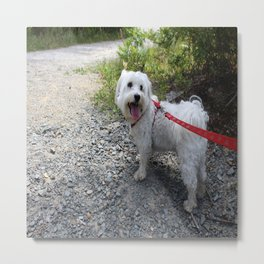 Puppy Going for a Hike Metal Print