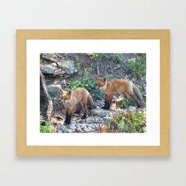 fox 2018-6 Framed Art Print
