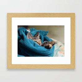 Arabela, the cat. Framed Art Print