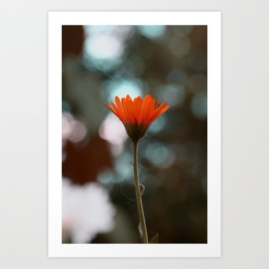 orange flower . Art Print