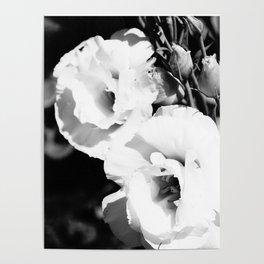 Longwood Flowers Poster