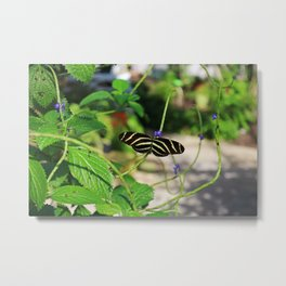 In the Company of Longwings Metal Print