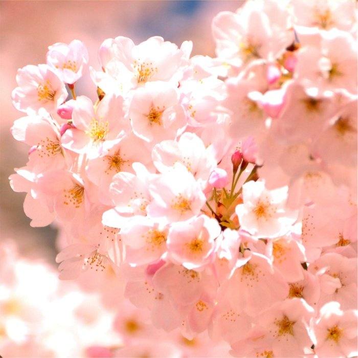 Pretty Pink Spring Blossoms :) Comforters