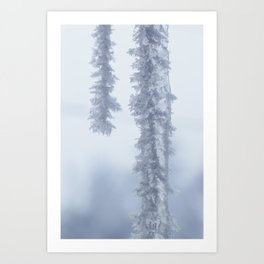 Frosted Icicles Art Print