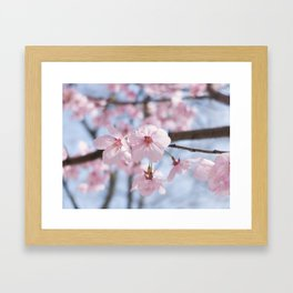 Two pink cherry blossoms & blue sky Framed Art Print