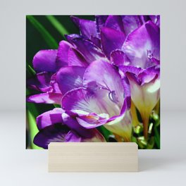 Royal Purple - The Prince Of Freesias Mini Art Print