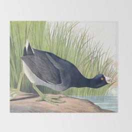 American Coot Vintage Bird Illustration Throw Blanket