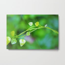 Macro Ivy with Little Green Leaves Metal Print