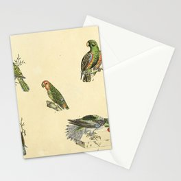 050 psittacus accipitrinus psittacus sinensis Chattering Lory psittacus melanopterus Red headed Lovebird10 Stationery Cards