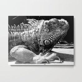 Armoured without a Care Metal Print