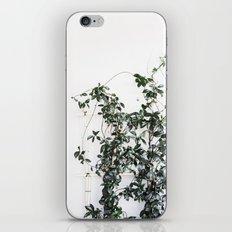 Trellis greenery iPhone & iPod Skin