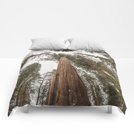 Sequoia Stretch - Nature Photography Comforters