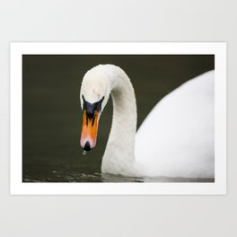1046365 Mute Swan Art Print